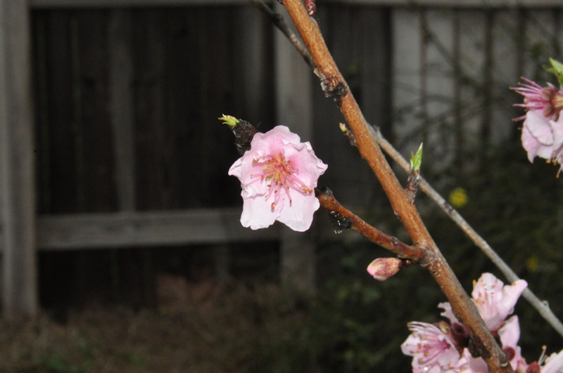 Mon, March 8, 2010