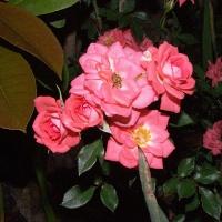 2009 Garden Photos